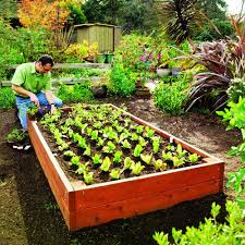 Cover photo for Have You Considered Trying Raised Bed Gardening?
