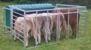 Cover photo for Creep Feed Calves