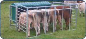 Cover photo for Do You Know the Advantages of Creep Feeding Your Calves