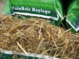 Cover photo for Some Guidelines to Remember When Feeding Haylage