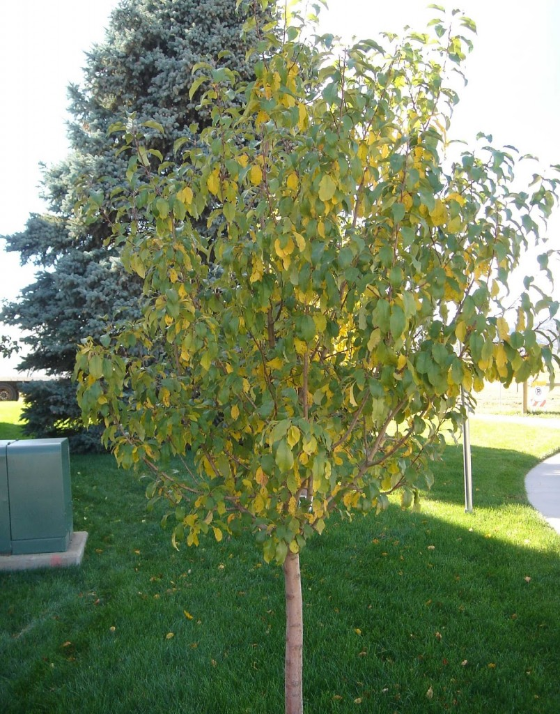 Have Your Trees Started Dropping Their Leaves Already
