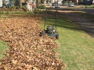 Cover photo for How Are You Going to Dispose of Your Fall Leaves?