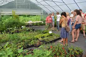 inspecting nursery plants