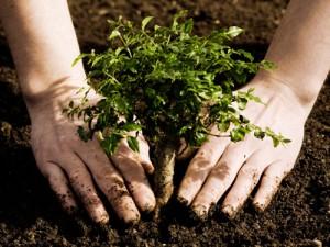 tree_planting.4763326_std
