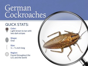 german-cockroach-pest-id-card_front