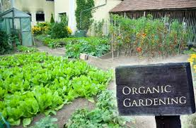 Cover photo for Pesticides Approved for Organic Production That Every Gardener Might Like to Try