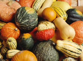 Cover photo for Winter Squash-as Beautiful as It Is Nutritious