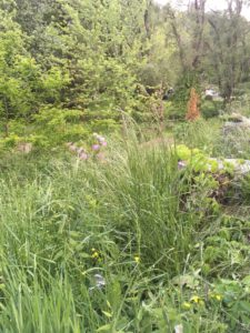 Overgrown areas are prime habitat for snakes, which can bite pets.