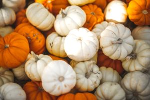 pile of miniature pumpkins
