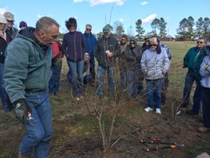 Cover photo for Winter Fruit Pruning Class