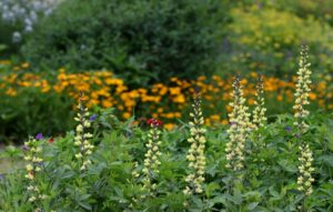 Cover photo for Virtual Tours of Extension's Pollinator Paradise Garden Will Get You Fired Up for Spring!