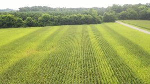 Cover photo for Video: 5-Minute Field Day on Corn Side-Dressing